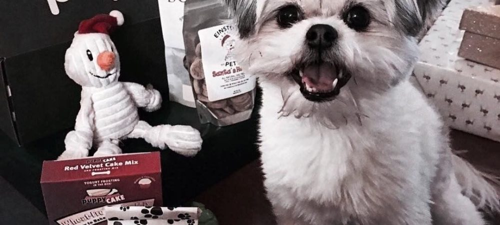 Kyra's Top Holiday Picks with PupJoy